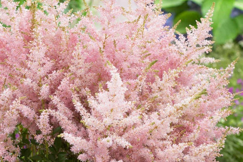 10 Of Our Favorite New Perennials For Fall Planting