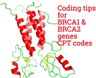 Coding Guide For New Brca1 Brca2 Cpt Codes