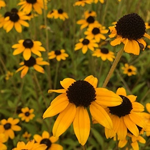 We've compiled a list of a few common questions regarding native plants to help you along the way.
