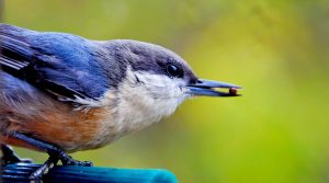 Planting native plants is just one way to help the native bird population this fall.