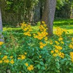 5 Ways to Enrich Your Local Environment with Native Plants