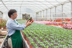 a man works in a local native plant nursery
