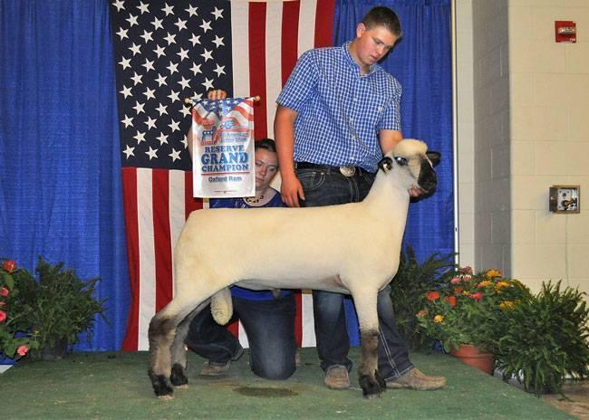 American Oxford Sheep Association