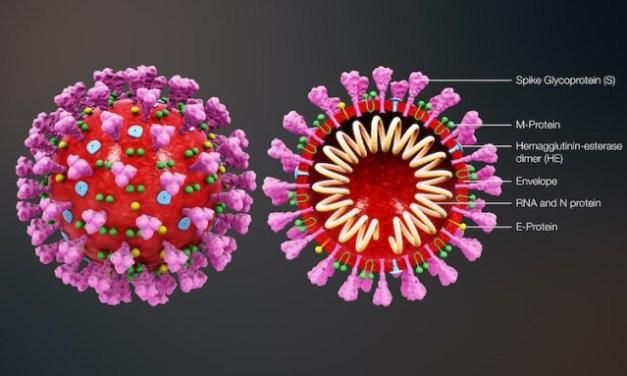 Coronavirus Link Rollup – American Partisan