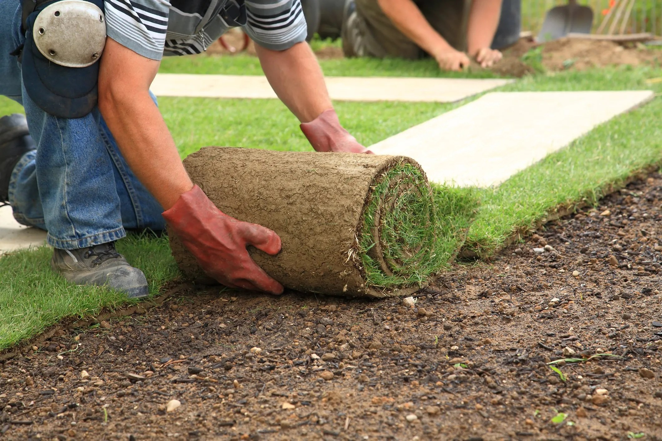 laying-sod-for-new-lawn-13960915