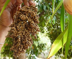Starting new traditions with Sorghum & Quinoa