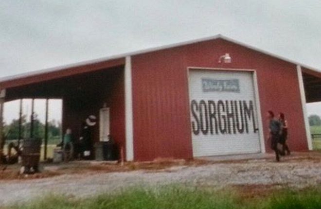 sorghum-and-the-walking-dead