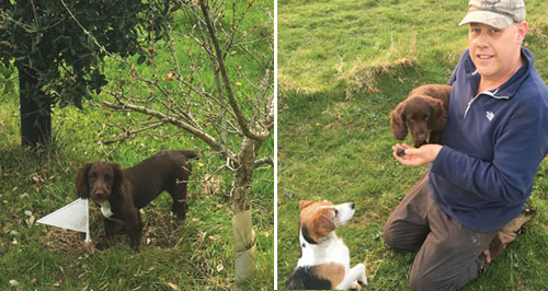 Bella the truffle dog and Harvester with trained dogs