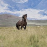 Wild Horses Adobe Town Wild Families Reunited At Black Hills Wild Horse Sanctuary American Wild Horse Campaign
