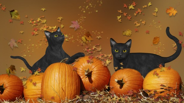 Black cats Pumpkins