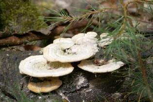 Nog meer paddenstoelen