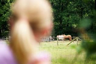 Natuurlijk moet Jelka bij de paarden kijken