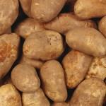 VrijMiSong | Aardappels?