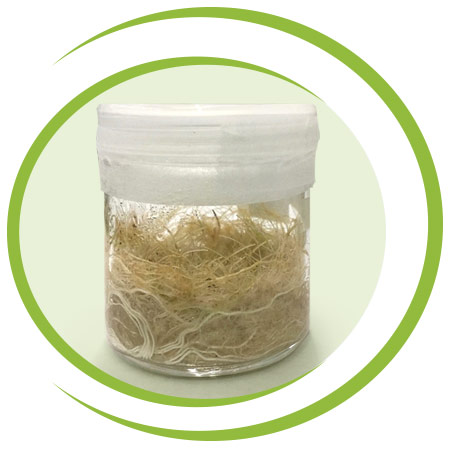 amerstem-continuous-growth-of-hairy-root-biomass