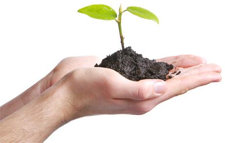 amerstem-FREE,-SUSTAINABLE-technology-to-produce-immunoadjuvant-saponins-without-harming-a-single-Quillaja-tree