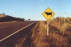 Animais-na-estrada-jaguaquara