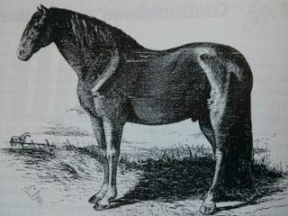 Caballo de pura raza española de la Real Yeguada
