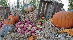 folie - Journées d'Octobre et Folie Flore : « Mangez des pommes ! »