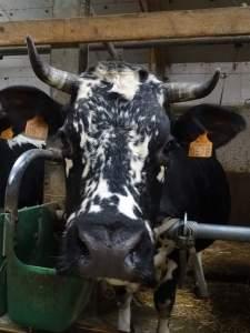 DSC04515 - Salon de l'agriculture : Mamsel y sera !