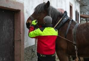 PierreSimlerEbba 006 - Quand le cheval labeur remplace le cheval vapeur