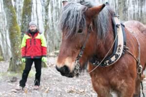 PierreSimlerEbba 039 - Quand le cheval labeur remplace le cheval vapeur
