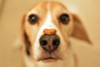 premio cane foto