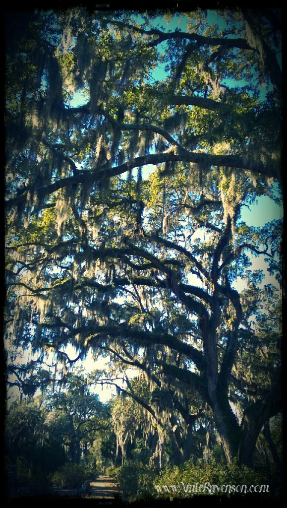 Bonaventure tree