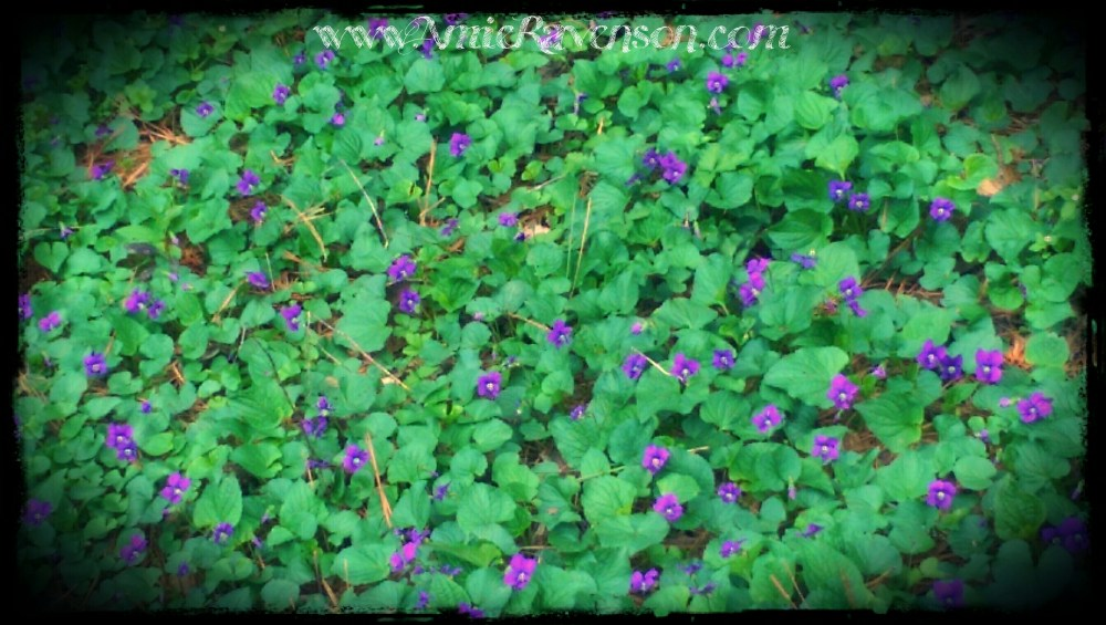Our backyard is completely covered in violets right now.  <3