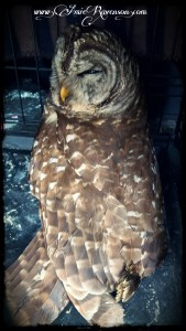 Owl- Sacred to Hecate and Inanna