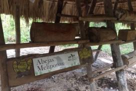 Abejas meliponas en Kiichpam Kaax