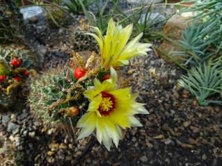 09 - cactus