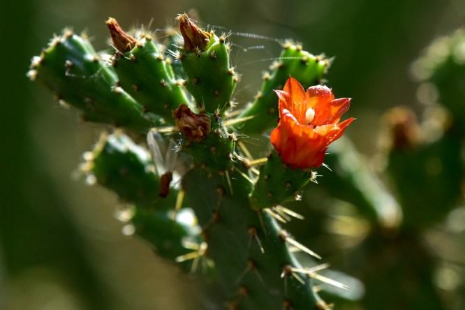 19-cactus