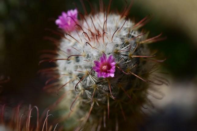 24-cactus