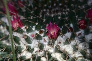 25-cactus