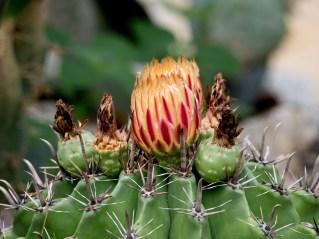 029-cactus-sp