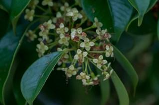 47 - Arbusto com flor verde