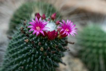 25 - cactus