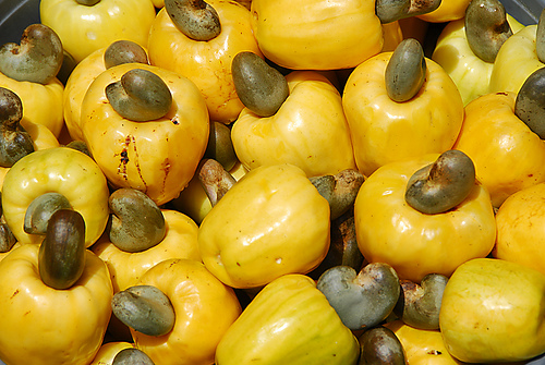 Nutty Benefits: What You Should Know About Cashew Nuts
