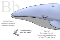 B is for Blue Whale