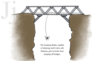J is for Jumping Spider