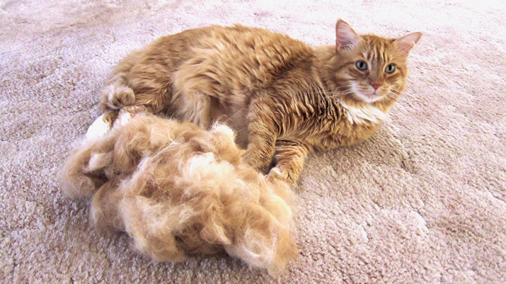 max next to a huge pile of his fur