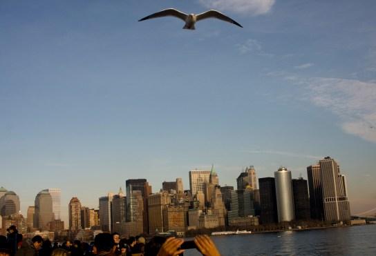 NY Bird