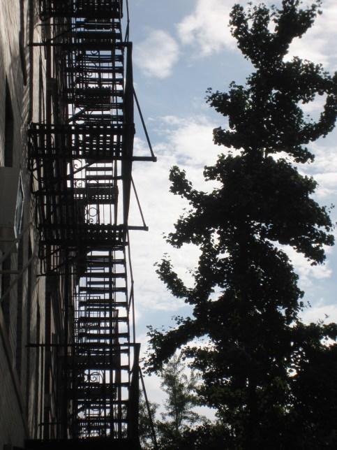 Stairs, tree