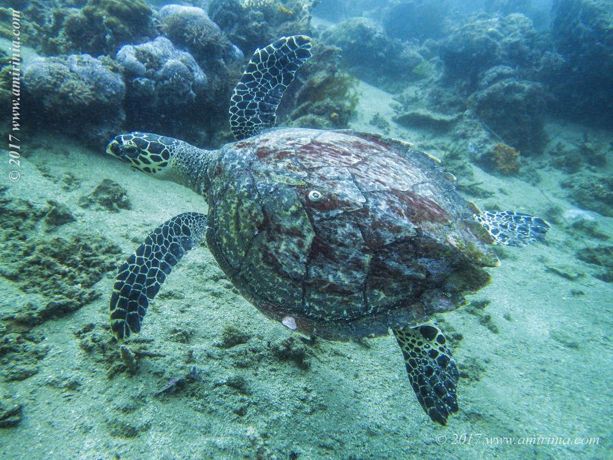 Marine Life_009