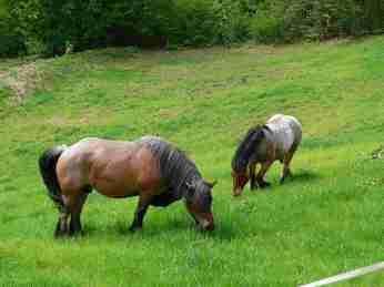 Depuis le printemps 2010 Roger Dirand a trouvé un éleveur de chevaux qui a bien voulu mettre en parc deux superbes chevaux de trait. Une excellente initiative qui fera économiser les frais de fauchage sur cette partie du terrain.