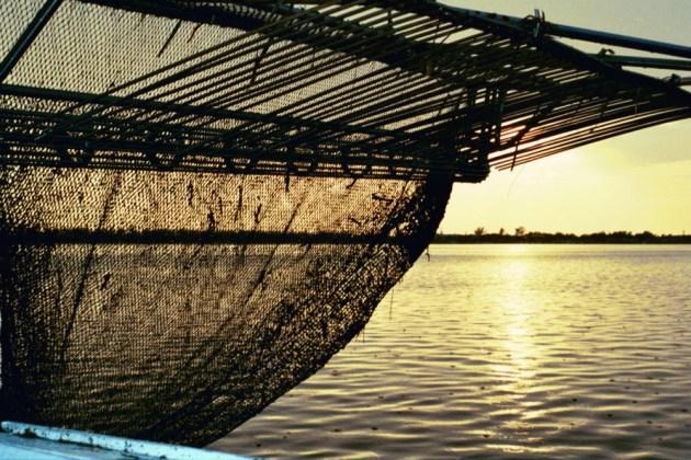 Cortez shrimp boat - Cindy Lane | Sun