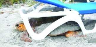 Turtle under chair
