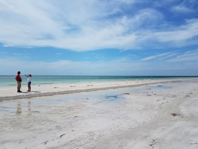 Todaro, Pfeiffer study beach