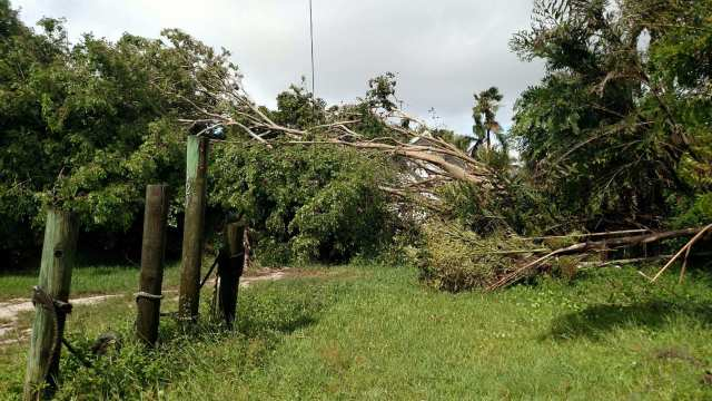 Cortez post Irma