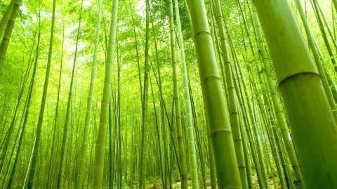 Hollow Bamboo meditation